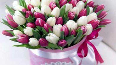 تصویر راهنمای پرورش گل لاله