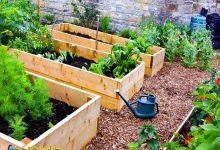 تصویر پرورش گیاهان در بستر مرتفع
