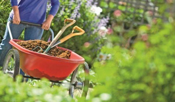 نکات مهم در باغبانی