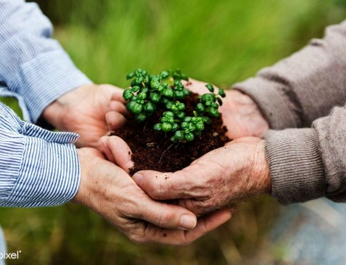 گیاهان در کنار ما زندگی می کنند