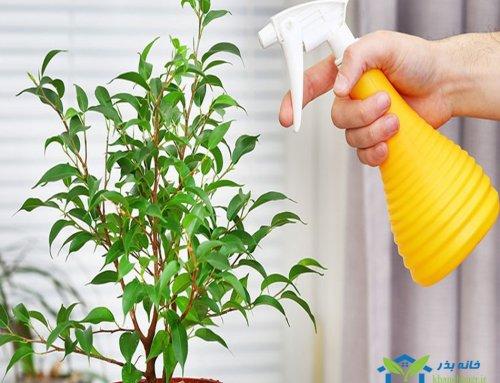 راهنمای رشد سریعتر گیاهان