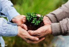 تصویر گیاهان نیز در کنار ما زندگی می کنند