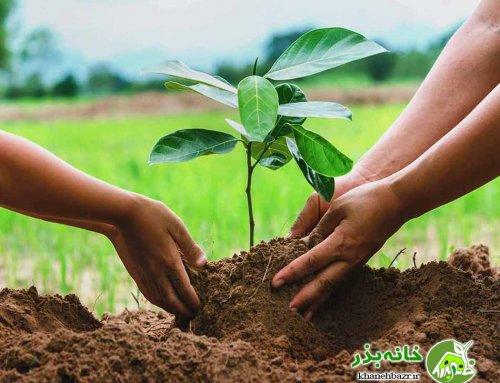 راهنمای اصولی آماده سازی باغ