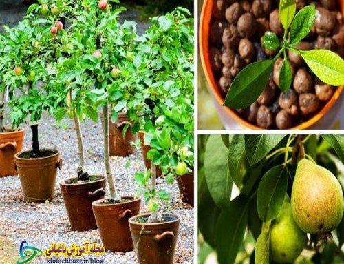 راهنمای صحیح کاشت درخت میوه